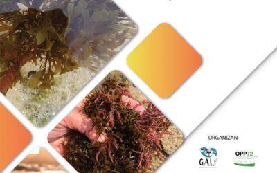 Conclusiones de Las Jornadas técnicas y de investigación sobre el alga invasora del Estrecho de Gibraltar